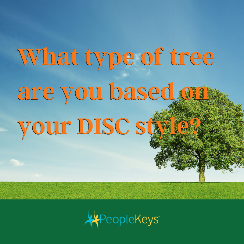 What type of tree are you based on your DISC style?